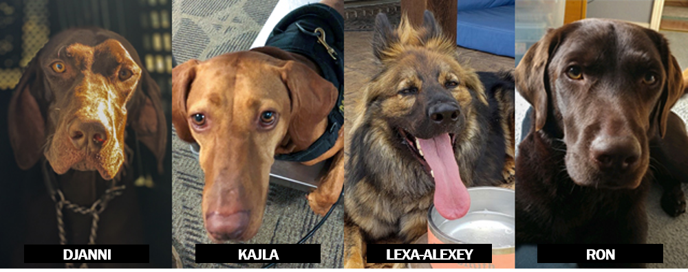 Photos of each of the finalists - Djanni, Kajla, Lexa-Alexey, and Ron