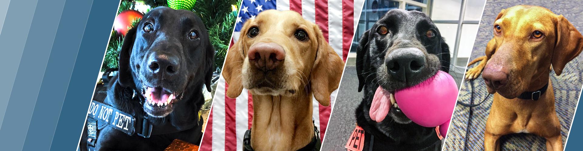 4 TSA canines
