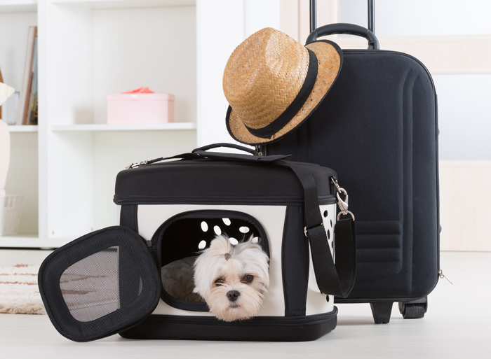 Dog in Travel Carrier