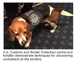 U.S. Customs and Border Protection canine and handler demonstrate techniques for discovering contraband at the borders.