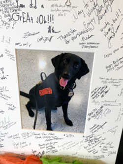 Canine Retirement at DFW
