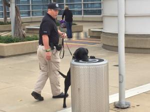 A TSA explosives detection canine team searches a trash bin