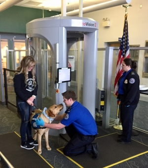 TSA officer at Elmira Corning Regional Airport screens a guide dog in a checkpoint familiarization exercise for a group of dogs and their trainers.